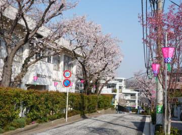地区最大級の「港南桜まつり」パレードや模擬店も【2019年3月30日】