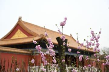 春の紫禁城を彩る花々