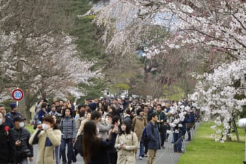 一般公開が始まった皇居・乾通りで、桜を楽しむ人たち=30日午前