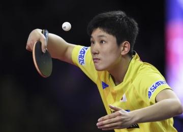 張本智和、準々決勝で敗退 卓球カタール·オープン