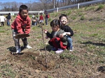 陽光桜の苗木を植える子どもたち=桜川市大泉