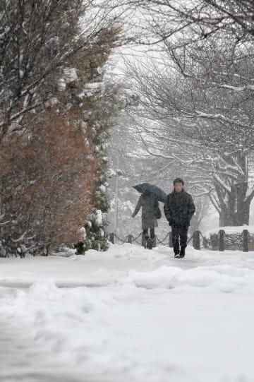 歩道には、湿った雪が降り積もった=31日午後0時50分ごろ、八戸市北白山台5丁目