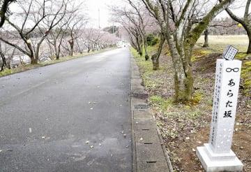 千早と新が感動の再会を果たした場所のモデルとなった桜並木。「あらた坂」と命名され、記念碑が建てられた=3月31日、福井県あわら市自由ケ丘2丁目