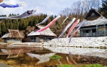 うっすら雪景色の中を悠々と泳ぐこいのぼり=4月2日、福井県越前町笈松の悠久ロマンの杜