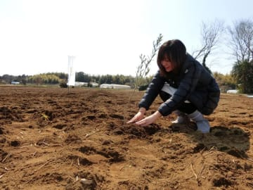 侍オリーブの農場で苗を植樹する平井さん=佐倉市