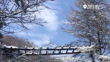 キンシコウ、野生動物回廊にかわいらしい姿見せる 湖北省