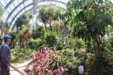 温室内には約千株の植物が残されており、温室がなくなると枯れてしまうという=長崎市、旧県亜熱帯植物園
