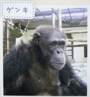 宮崎市フェニックス自然動物園で、チンパンジー舎から逃げ出した雄の「ゲンキ」(園の広報誌から)