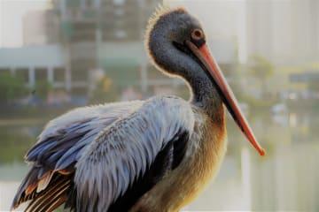 スリランカ·コロンボのベラ湖に集まる鳥たち