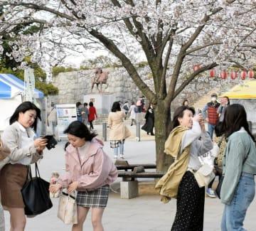 強めの風が吹く中で、花見に訪れた市民ら=5日午後、千葉市中央区の亥鼻公園