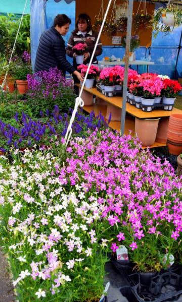 大小さまざまな植木や色とりどりの花々が並ぶ大植木市=5日、沖縄市農民研修センター特設会場