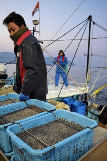 昨シーズンのコウナゴの初水揚げ。今年は不漁で宮城県内の三陸沿岸では水揚げゼロが続く=2018年3月26日、石巻市の石巻魚市場