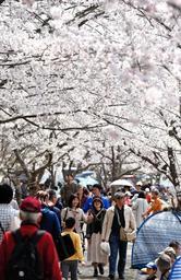 桜桟敷は満席。花見客でにぎわう西神中央公園=6日午後、神戸市西区糀台6