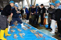 3月21日に今期最後の競りが行われたマツバガニ。安定供給で史上最高の漁獲金額につながった=兵庫県香美町香住区沖浦、柴山港