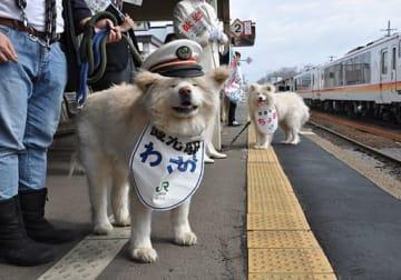 ホームでリゾートしらかみを出迎える観光駅長のわさおと営業主任のちょめ(右)=JR鯵ケ沢駅