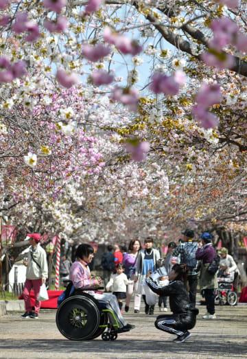 大阪市の造幣局で開かれた「特別観桜会」で桜を楽しむ人たち=8日午前