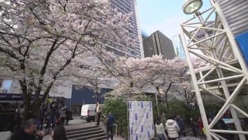 バンクーバーで桜祭り 大勢の花見客でにぎわう