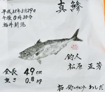 松原正芳さんのマアジの魚拓