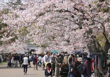 満開の桜を満喫する家族連れでにぎわった「膳所桜まつり」(大津市本丸町・膳所城跡公園)