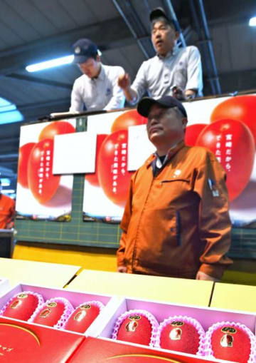 過去最高となる50万円での取引もあった「太陽のタマゴ」の初競り=8日午前、宮崎市中央卸売市場