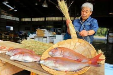 笠岡魚市場で始まった「タイの浜焼き」作り