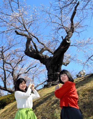 日本最古級とされるソメイヨシノを紹介する荒川さん(左)と大越さん=9日