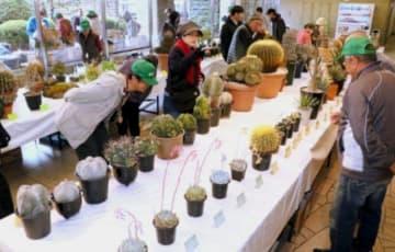 サボテンなどの多肉植物が並ぶ展示会