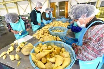 操業を再開した加工場でゆでたタケノコの下処理をするパート女性ら=9日、倉敷市真備町有井
