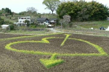 丸山自治会が田んぼに手掛けた巨大菜の花アート=竹田市久住町白丹