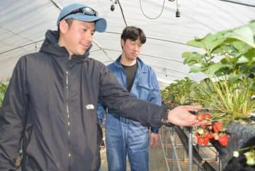 金田一温泉の源泉の湯を活用してイチゴ栽培に取り組む大建宗徳部長(左)と大沼利治さん=12日、二戸市