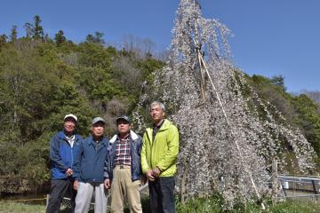 「100年後の子どもたちのために」と活動するサクラ管理有志のメンバー=常陸太田市瑞龍町
