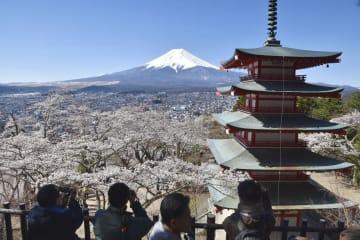 五重塔がある新倉山浅間公園から望む桜と富士山=13日、山梨県富士吉田市