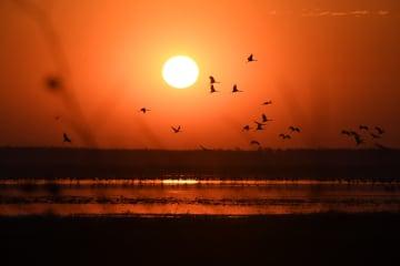 北帰行の渡り鳥、飛来がピークに 吉林省莫莫格自然保護区