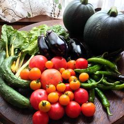 昨年夏に収穫したトマトやナス、キュウリ、カボチャなど(伊藤さん提供)