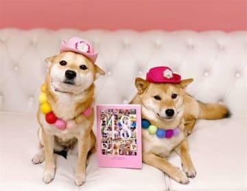柴犬「のん」(左)と「うの」。中央が写真集(普津澤さんのインスタグラムより)