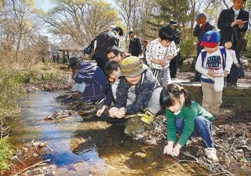 子どもたちがホタルの幼虫を放流した体験会