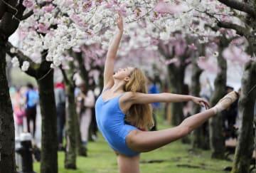 米ルーズベルト島で桜祭り開催