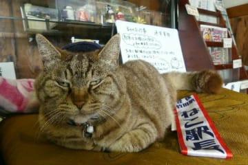豊後竹田駅ねこ駅長に就任して1周年を迎える名物猫「ニャー」=竹田市