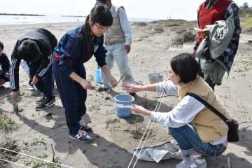 蚊口浜の海岸にハマボウを挿し木する高鍋高サイエンス部の生徒ら
