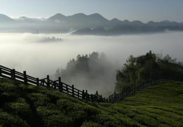 仙境のごとく霧満ちる茶園 湖北省宣恩県