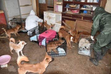 屋内で飼育放棄された犬をケージに入れて救出する保護団体メンバーや親族=都城市高城町