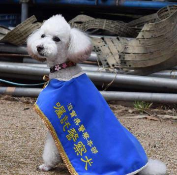滋賀県警初の小型犬の嘱託警察犬マル(大津市御陵町・県警察学校)