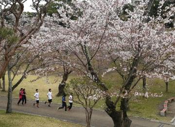 例年よりも長く咲いている桜=17日午後4時25分、宇都宮市塙田5丁目の八幡山公園