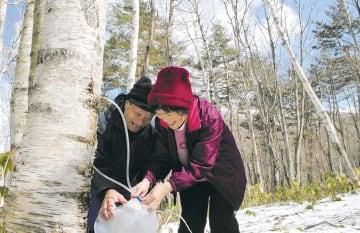 樹液を採取する柳平さん夫婦=9日、岩手県久慈市山形町の明神岳