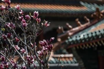 史跡に咲く花 遼寧省瀋陽市