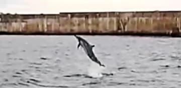 ジャンプするイルカ=14日、久米島町の真泊漁港