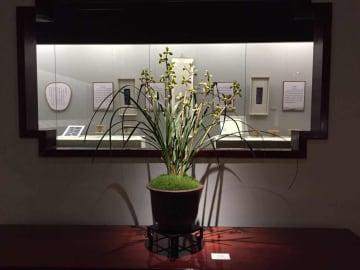 ランを主題に「得天之清-無錫芸蘭文化展」開催 江蘇省
