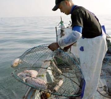 嶋本幸貴さんが「へた籠」を引き揚げる と、体長約30センチのモンゴウイカが勢いよく墨を吐いた=宇土市