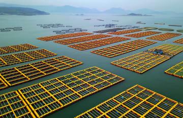 漁業を支えるアワビ 収穫期を迎える 福建省連江県