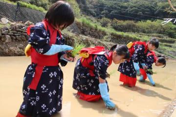 早乙女の格好で水田に苗を植える子どもたち=平戸市春日町